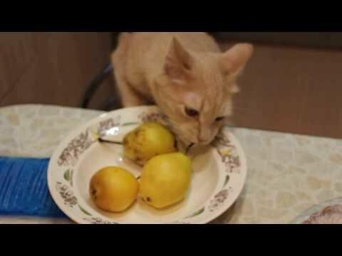 Вороватый кот