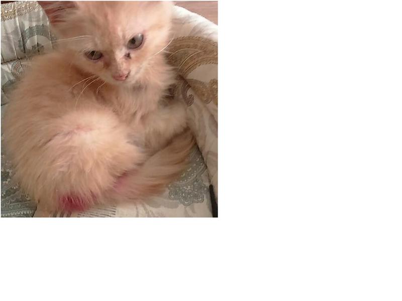 История котенка Тишки, которая хорошо закончилась