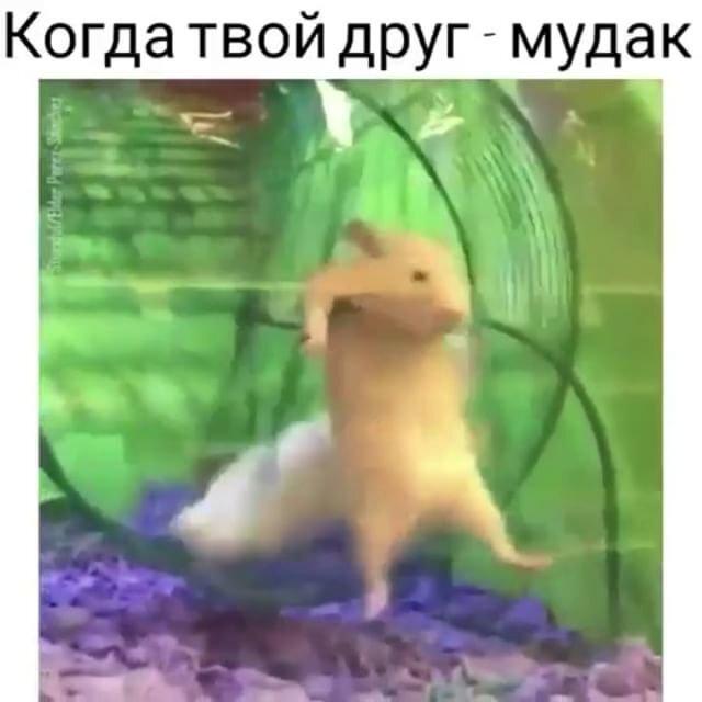 Солянка от 07.04.2018 от doknip за 07 апреля 2018