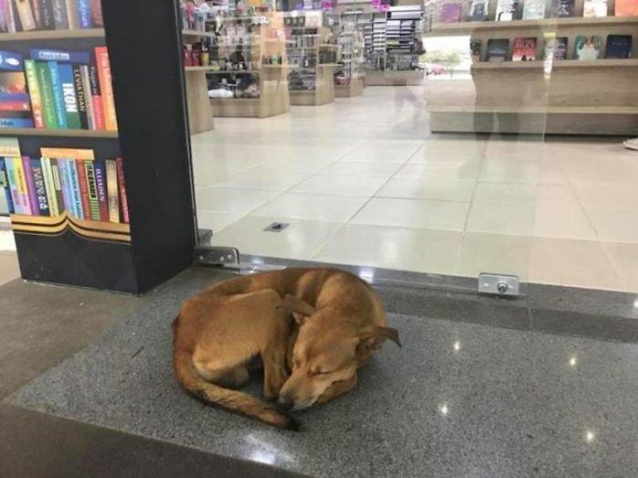 Бездомная собака украла в магазине книгу об одиночестве