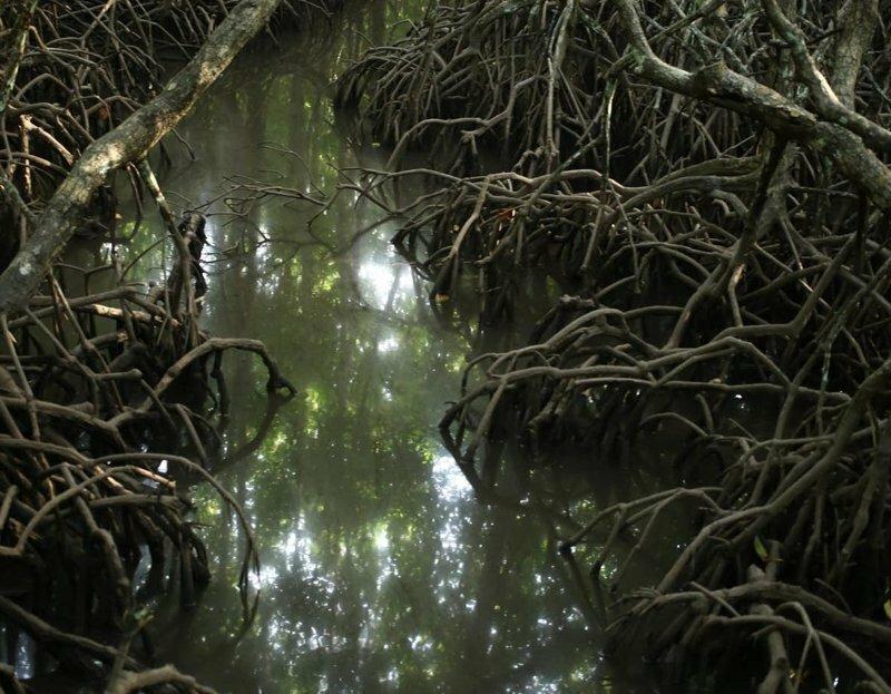 Мангровый лес: крутейший биом планеты
