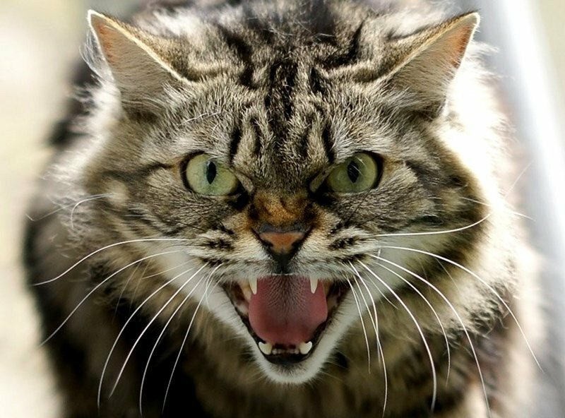 Вся семья госпитализирована из-за взбесившегося котика