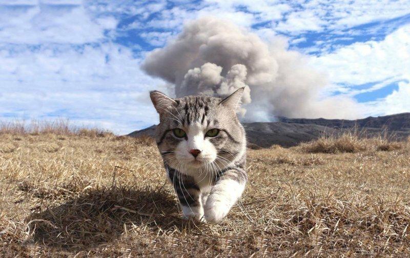 Фотогеничность зашкаливает: кот, который всегда замечательно выходит на снимках
