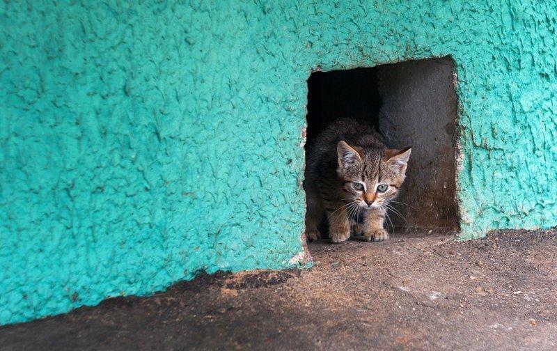 Минстрой разрешил котикам шастать по подвалам