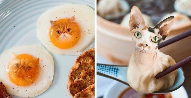 """""""Официант, у меня в еде котик!"""" - девушка добавляет котов в еду с помощью фотошопа"""