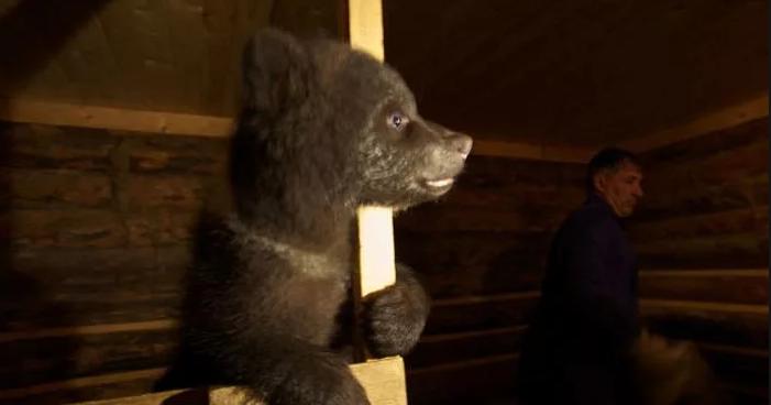 Биолог Валентин Пажетнов организовал приют для медвежат-сирот
