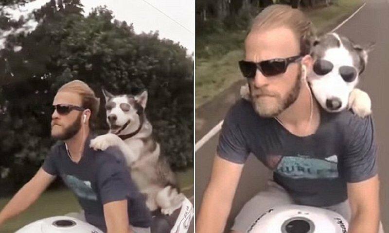 Собака-байкер в очках покоряет Гавайи!