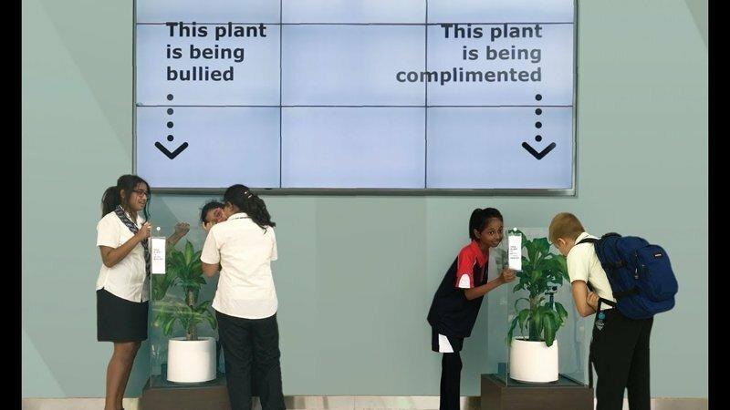 Ошеломляющий результат эксперимента: IKEA попросила школьников ругать растение в течение 30 дней