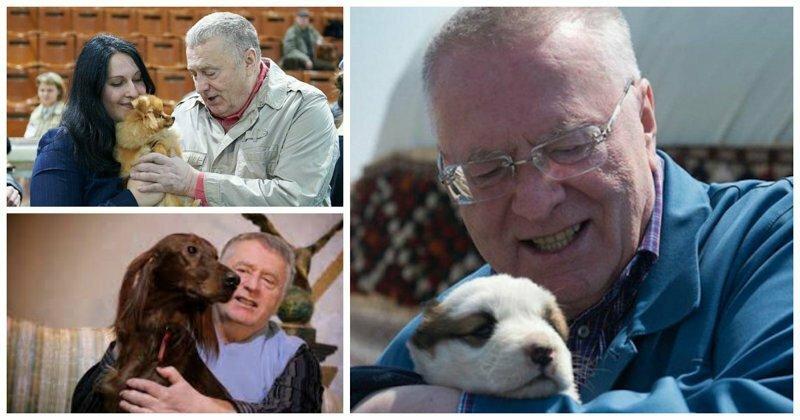 Жириновский пообещал исключить из ЛДПР всех собаковладельцев