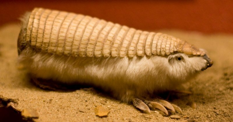 Самые странные животные нашей планеты