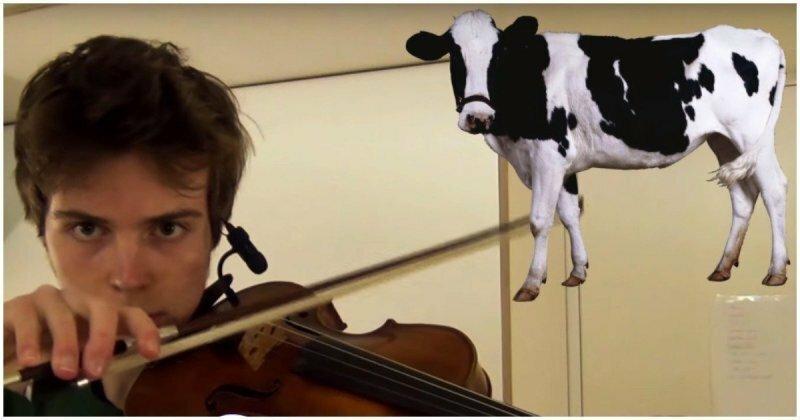 Музыкант мастерски имитирует звуки животных с помощью скрипки