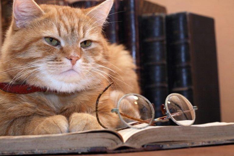 Налог на кота