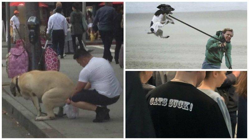 Собачники - одни из самых опасных, и тем не менее смешных представителей человека