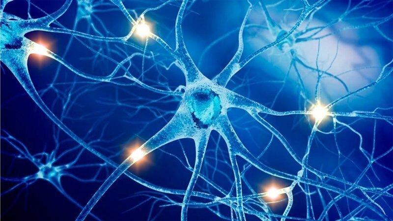 Пять лучших успокоительных средств для нервной системы