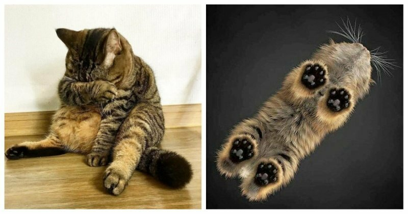 Когда котоматрица дала сбой: хозяин устроил коту разрыв шаблона