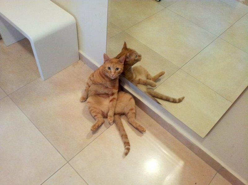 Кошки у зеркала