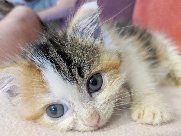 Однажды под крыльцом нашли крохотного котёнка-злюку