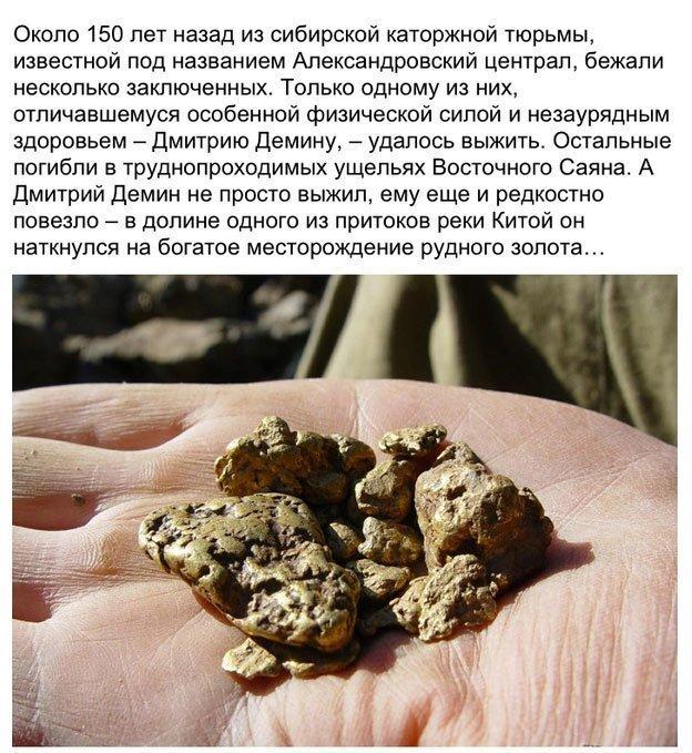 Тайна золотой жилы сибирского леса