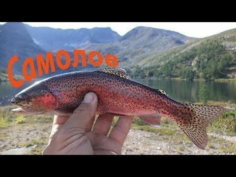 Самолов для форели. Рыбалка в горах