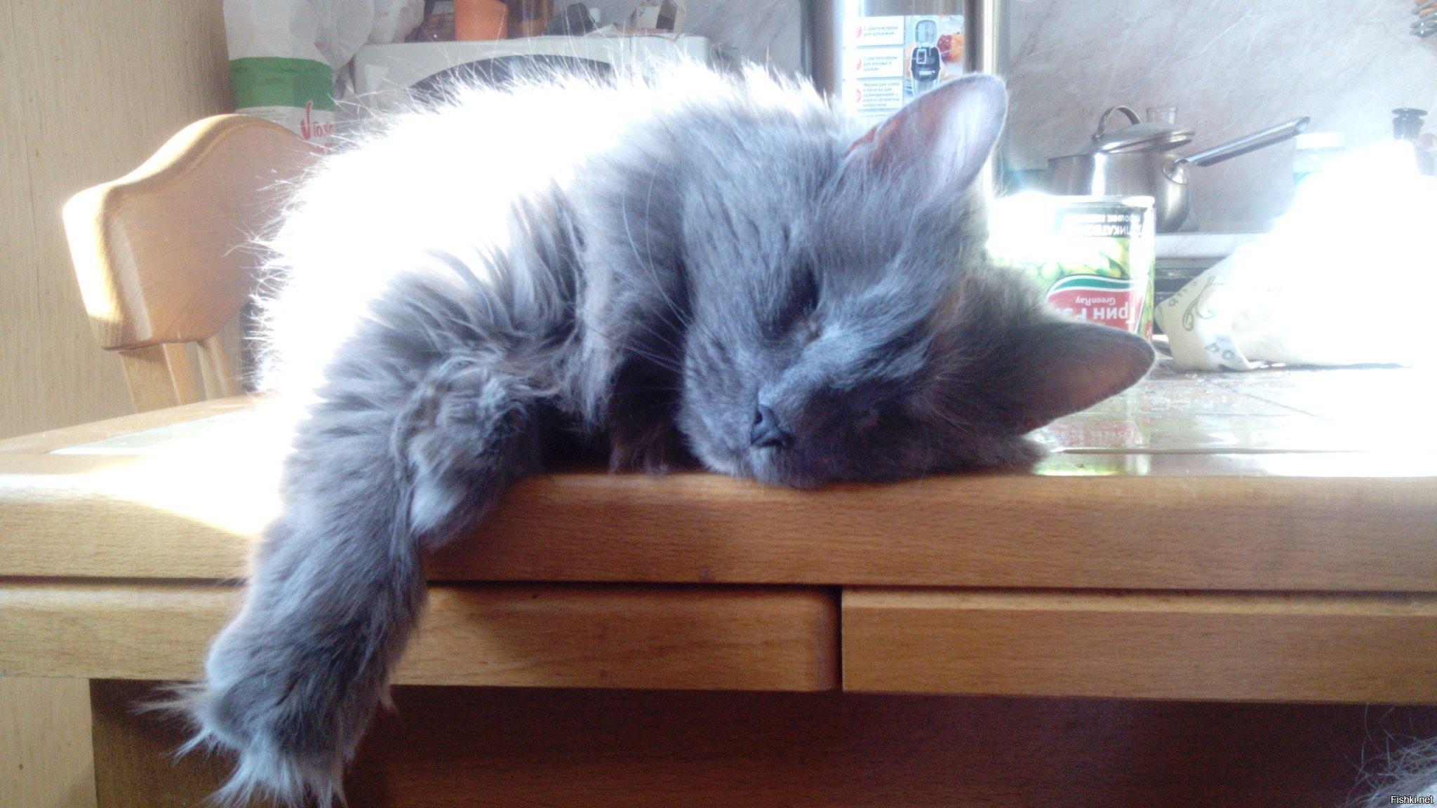Хищница устала