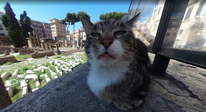 Google-карты сделали котика известным на весь мир