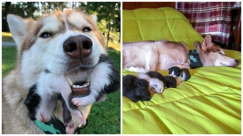 Собака спасла котят, которые были просто на волосок от смерти