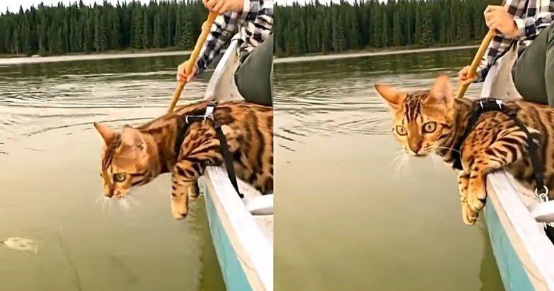 Кот плывет на лодке и внимательно изучает воду за бортом