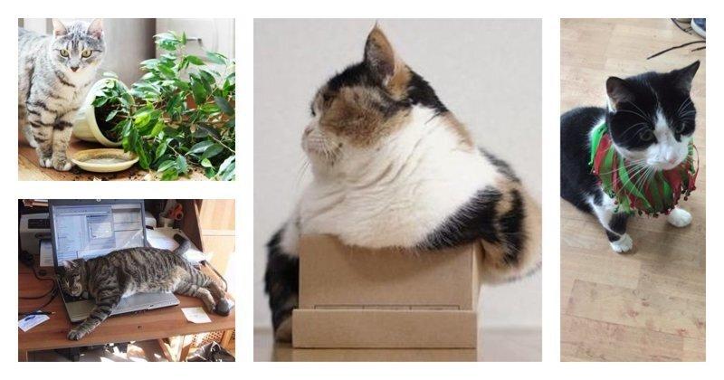 10 нюансов, о которых нужно знать, прежде чем обзавестись котом