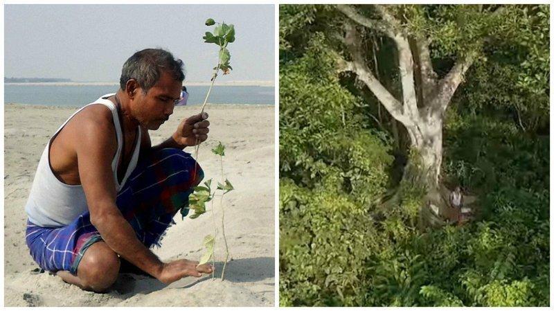 Джадав Пайенг - человек, который за 40 лет превратил пустыню в заповедный лес