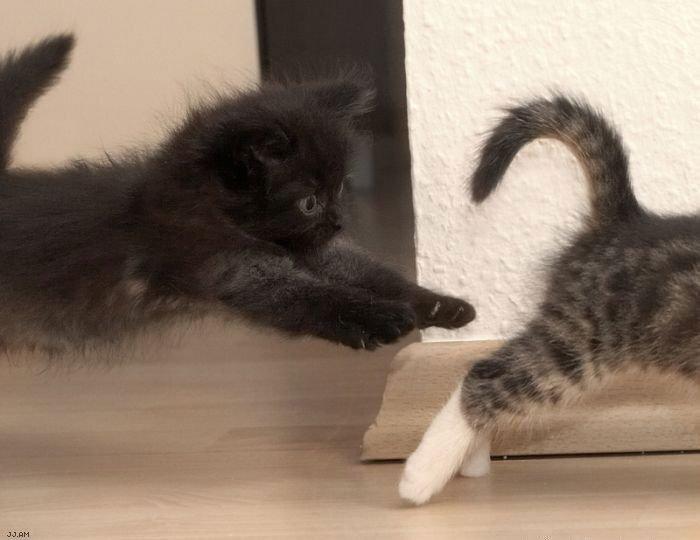 Подборка смешных котов