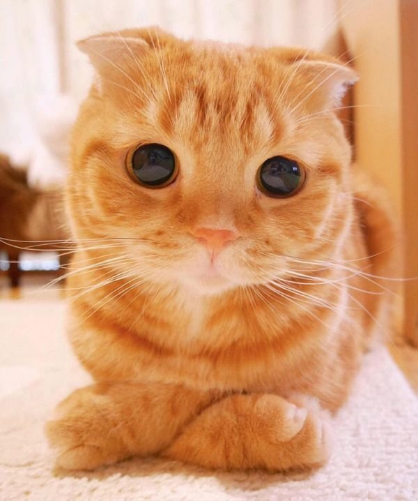 Подборка милых кошечек и котиков)