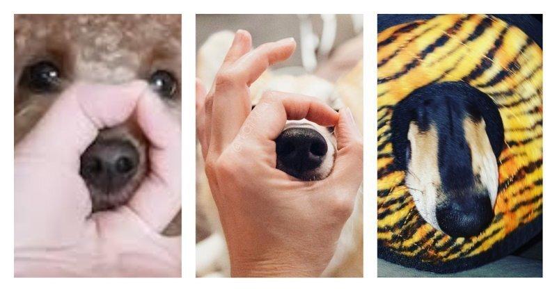 Просунь нос в кольцо: новый челлендж с братьями нашими меньшими