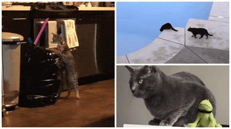 15 котов, которые ведут себя как последние сволочи