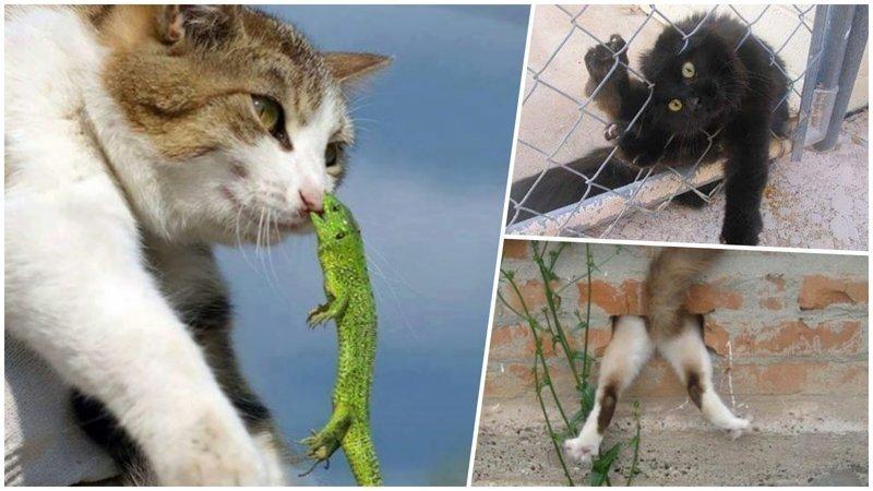 25 котиков, у которых серьёзные проблемы
