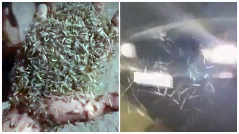 Видео: Таганрог переживает нашествие огромных зеленых комаров