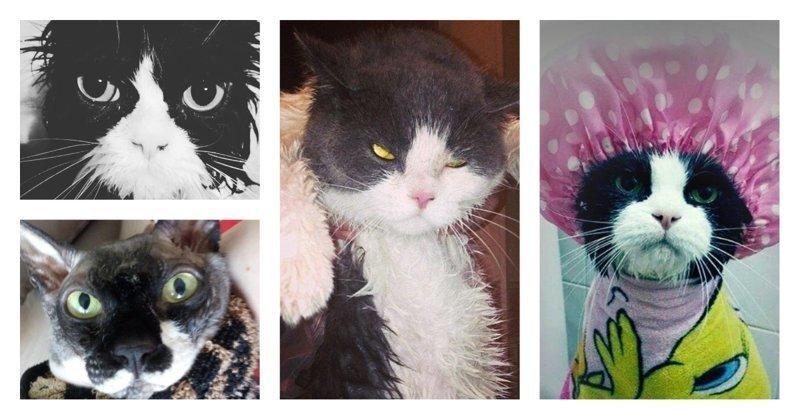 15 вымытых котиков, которые непременно отомстят своим хозяевам