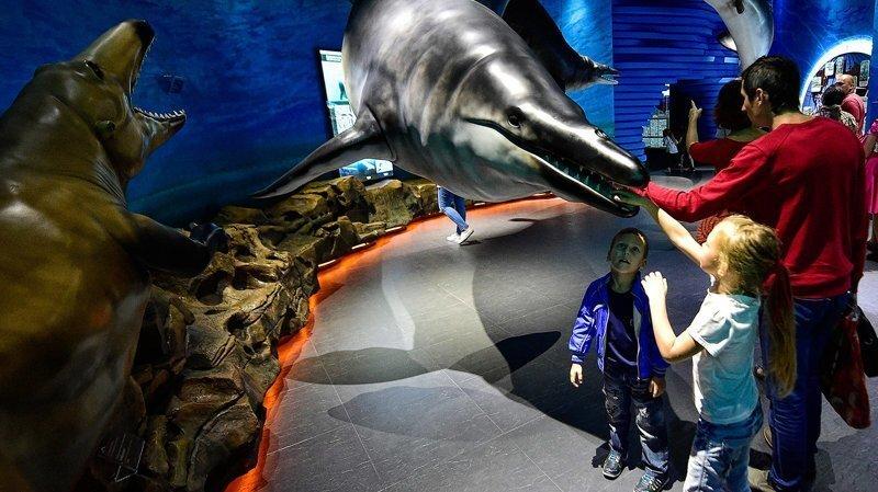 Теперь дельфин — это ваш муж
