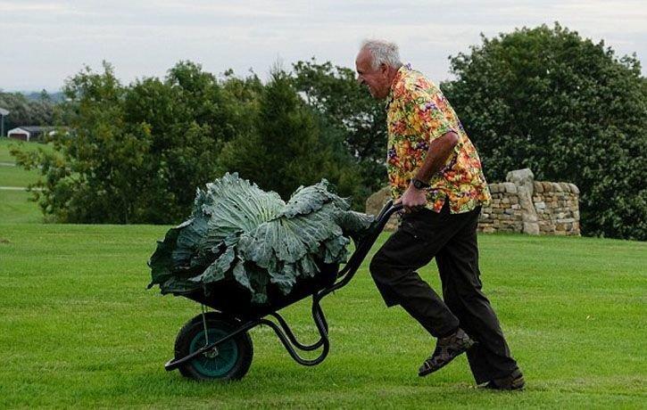 Британец смог вырастить овощи-гиганты