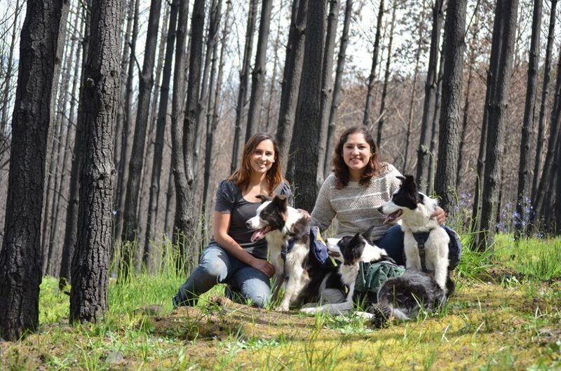Как с помощью теннисного мячика и трёх собак восстановить сгоревший лес