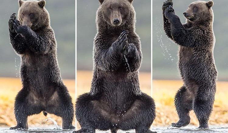 На Аляске медведь позанимался йогой