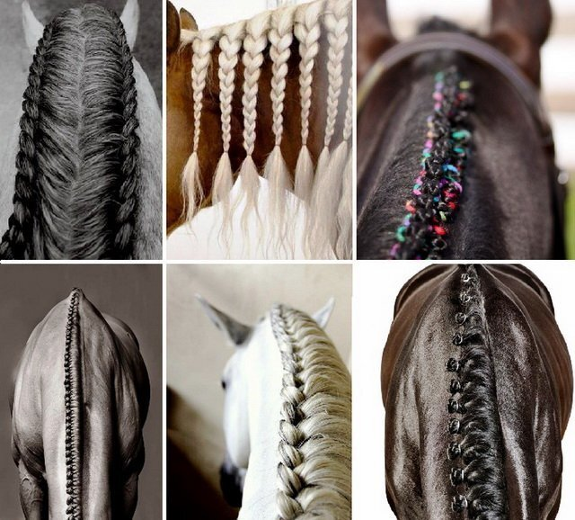 Лошади с красивыми прическами