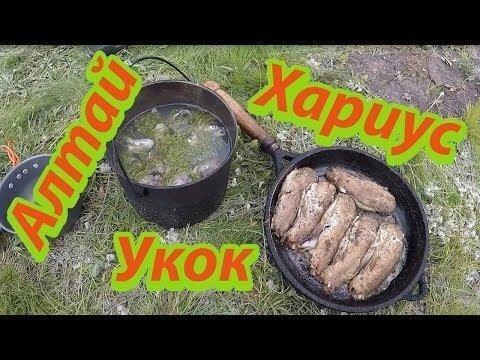 Блюда из Хариуса на плоскогорье Укок в Горном Алтае