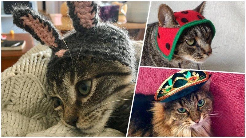 25+ очаровательных котиков в шапках для поднятия настроения