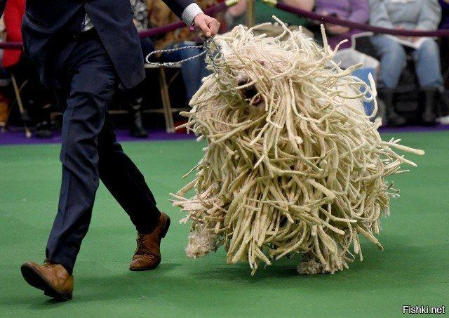 Это комондор, венгерская овчарка