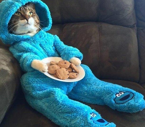 Тусовки не будет: американское посольство извинилось за кота в пижаме