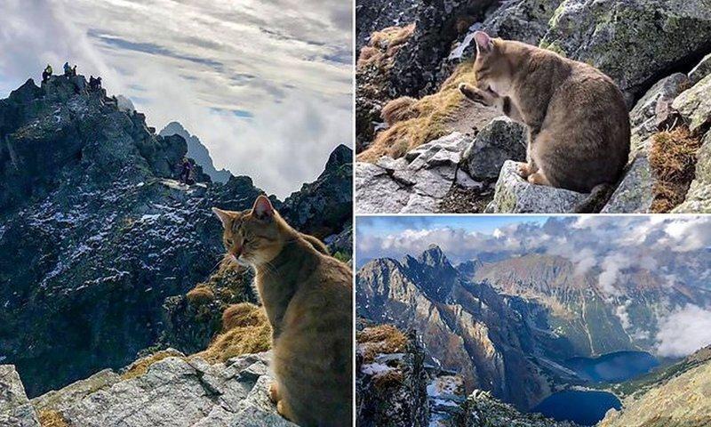 Кот-скалолаз: альпинист встретил на вершине горы домашнего кота