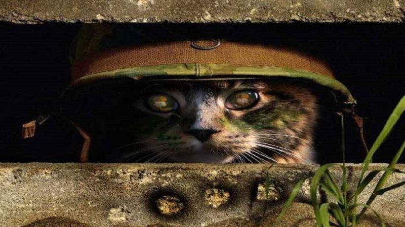 Кот, которому и война не страшна