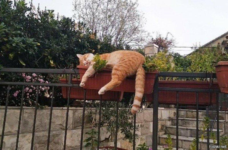 Будьте такими как этот кот и вы достигните совершенства
