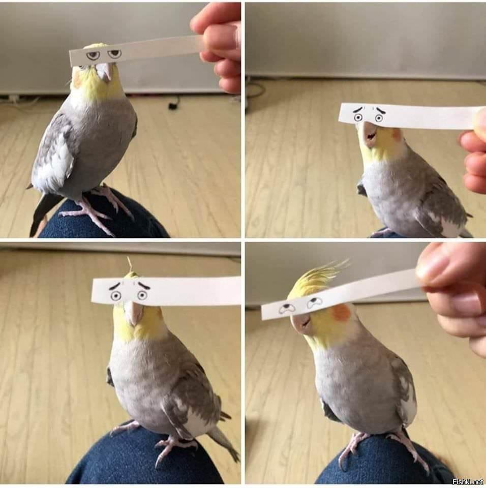 Птичечка))