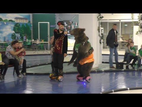 Медведь на гироскутере